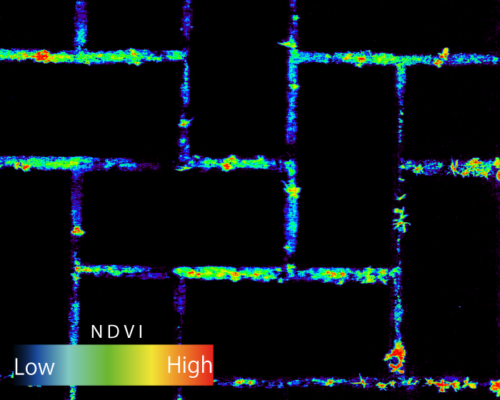 NDVI解析カラーイメージ