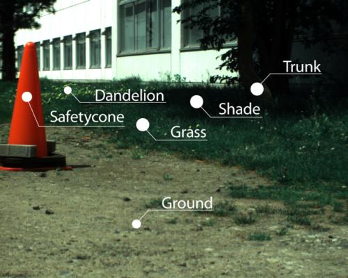 樹木・芝生・カラーコーンのある風景のポイント