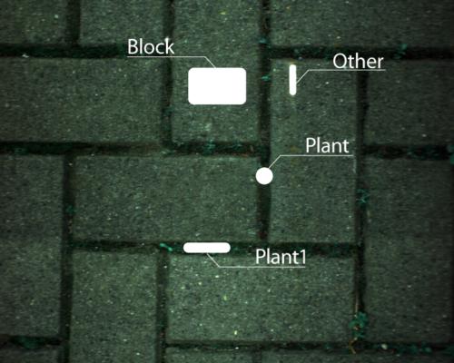 ブロックと植物のスペクトルデータ抽出エリア