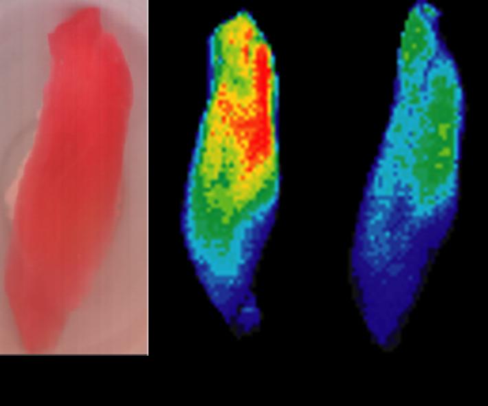 マグロ寿司のハイパースペクトルデータ例