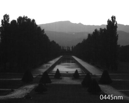 ハイパースペクトルイメージ:445nm