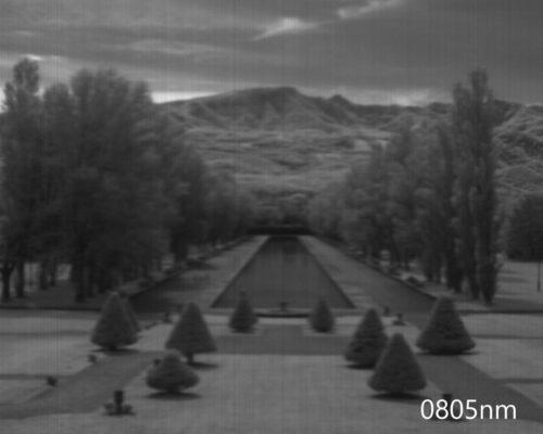 ハイパースペクトルイメージ:805nm
