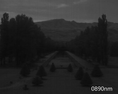 ハイパースペクトルイメージ:890nm