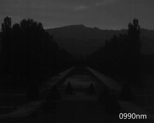 ハイパースペクトルイメージ:990nm