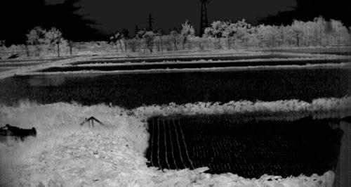 2016年6月10日江別市における田んぼのスペクトル計測-NDVImono-