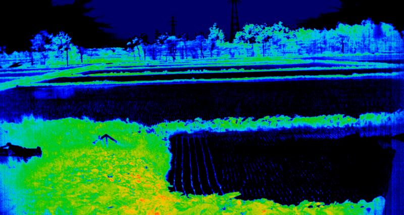 2016年6月10日江別市における田んぼのスペクトル計測-NDVI-