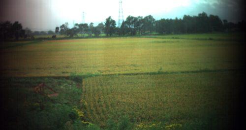 2016年9月06日江別市における田んぼのスペクトル計測