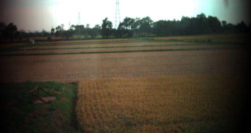 2016年9月27日江別市における田んぼのスペクトル計測
