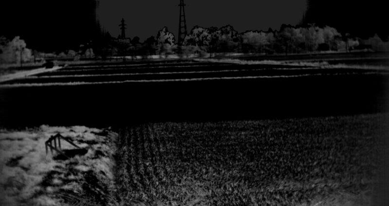 2016年9月27日江別市における田んぼのスペクトル計測-NDVImono-
