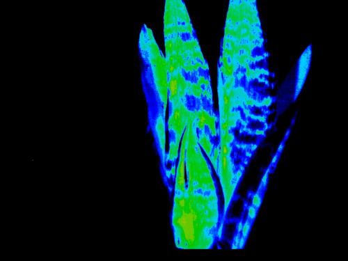 植物と造花NDVIハイパースペクトルイメージ