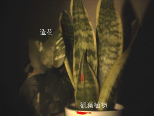植物と造花ハイパースペクトルイメージ